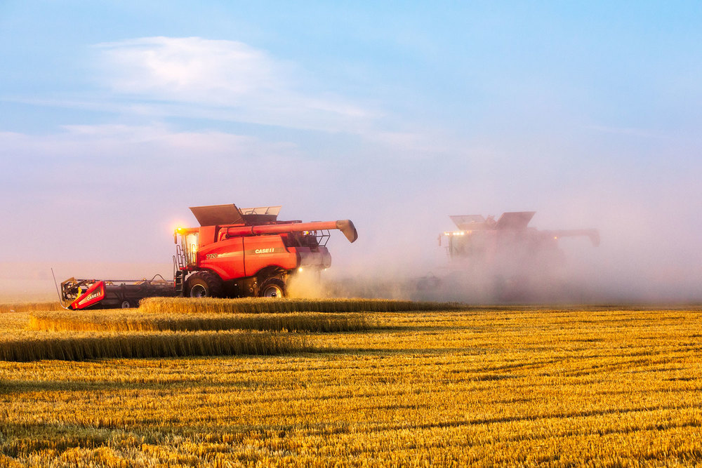 Two Combines Cutting Swaths