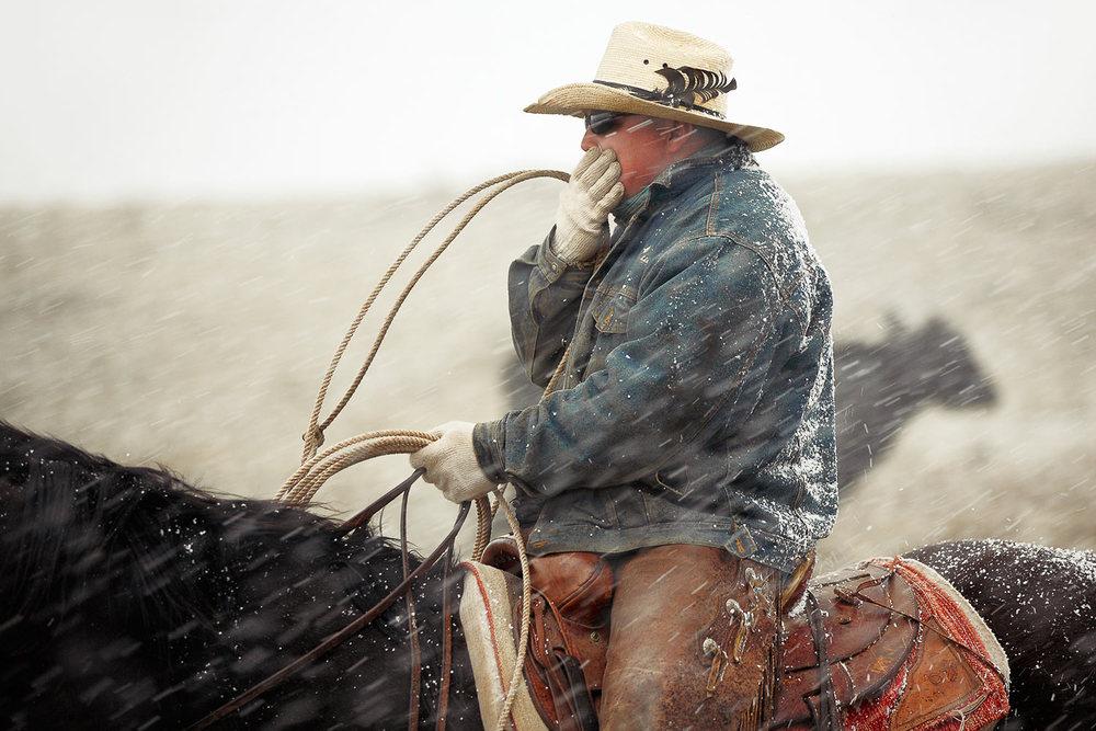 Cold Cowboy
