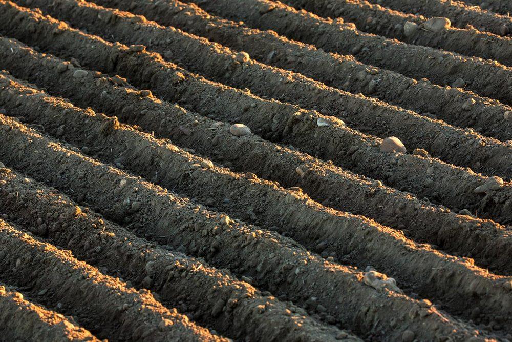 Organic Soil Rows