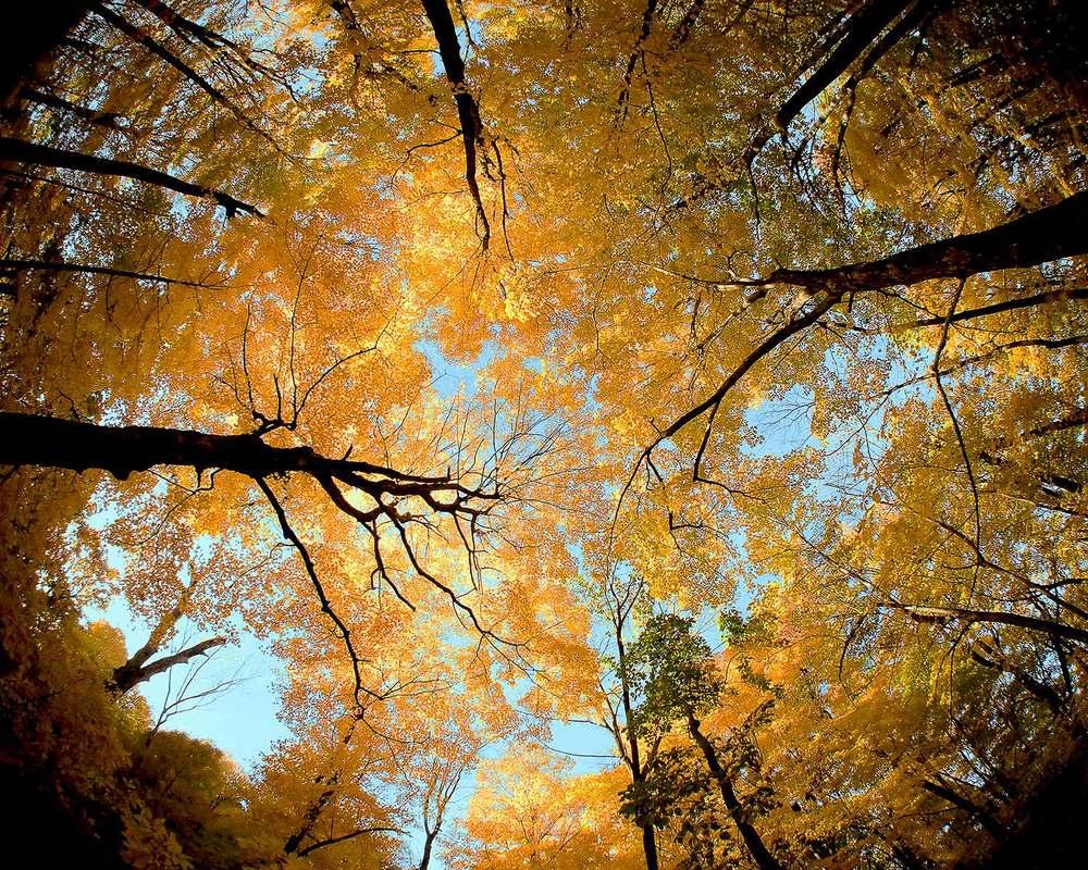 Wisconsin Canopy