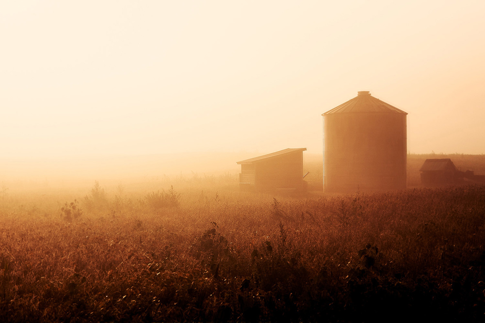 Misty Autumn Morn
