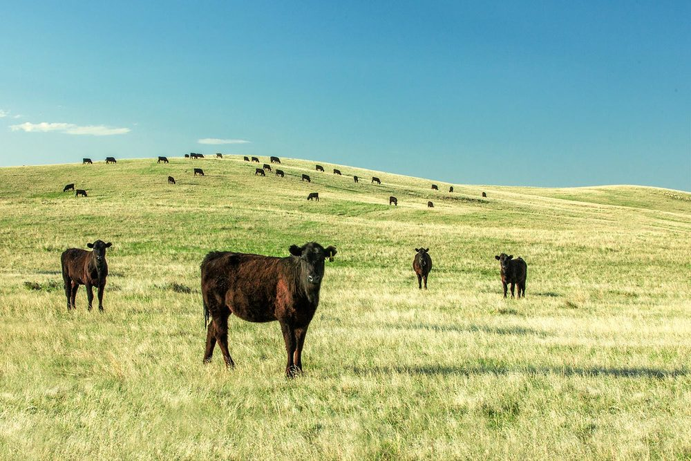 Angus Fields