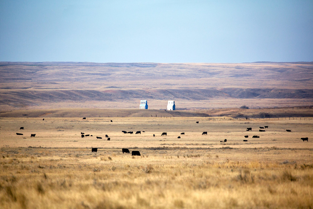Montana Skyline