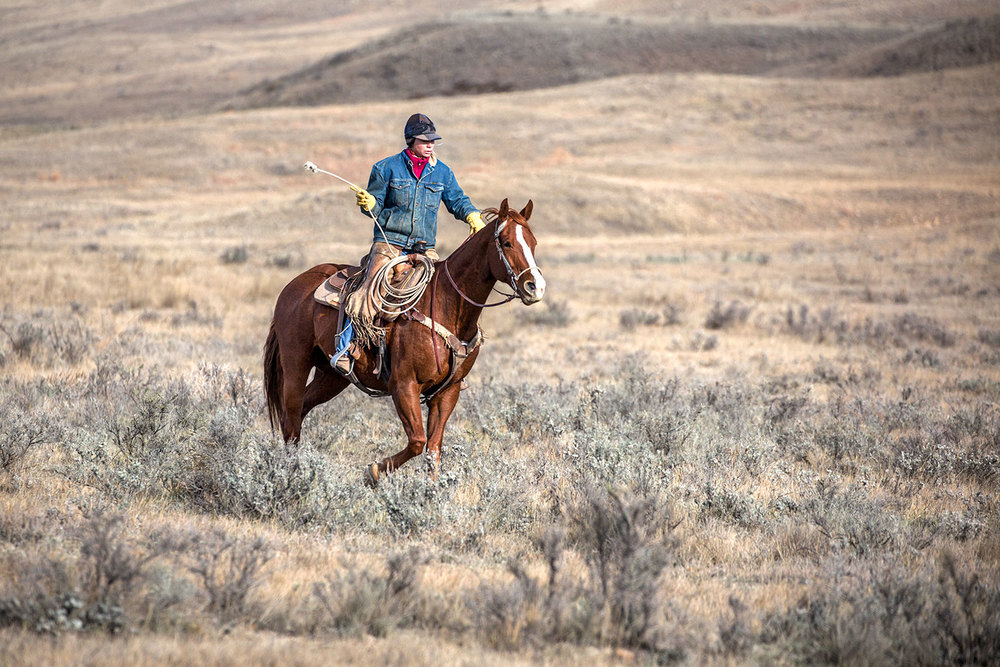Fast Through Sagebrush