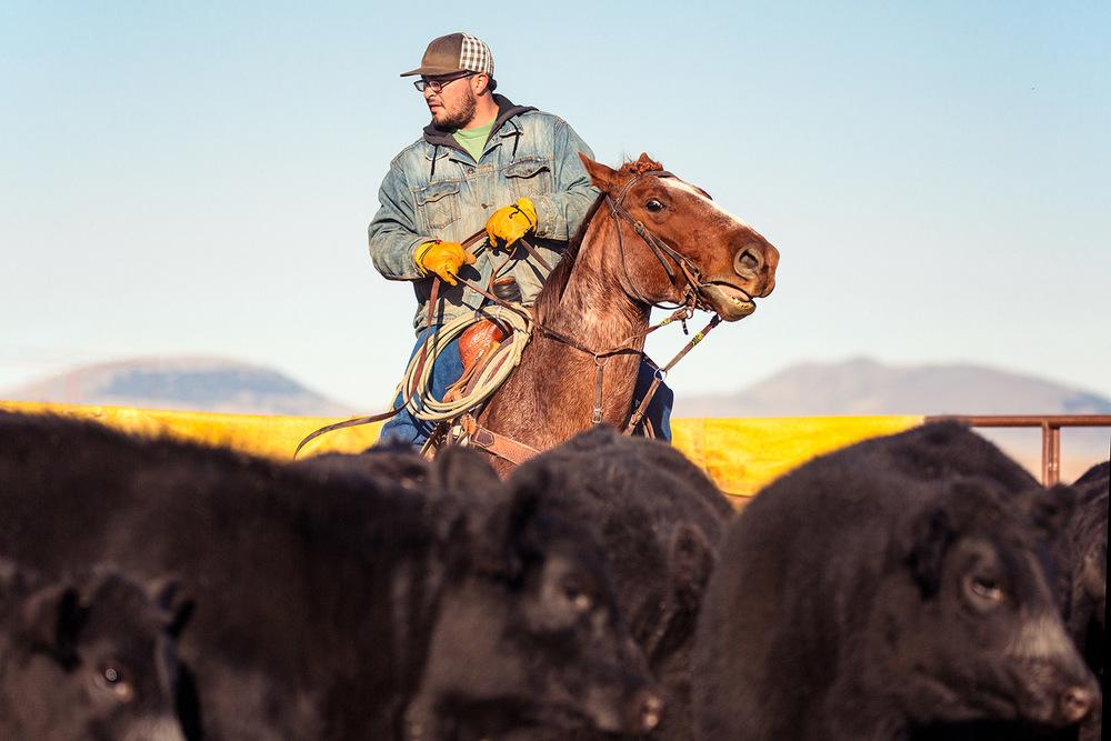 Working the Herd
