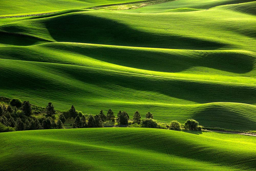 The view from Steptoe Butte looking east at Washington's beautiful rolling fields. → Buy a Print