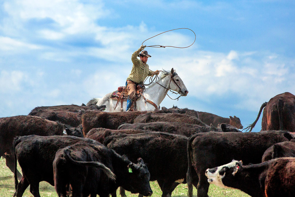 Agriculture Photography By Todd Klassy Cowboys Photos