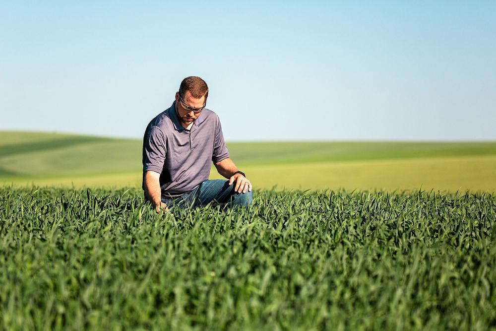 Checking Wheat