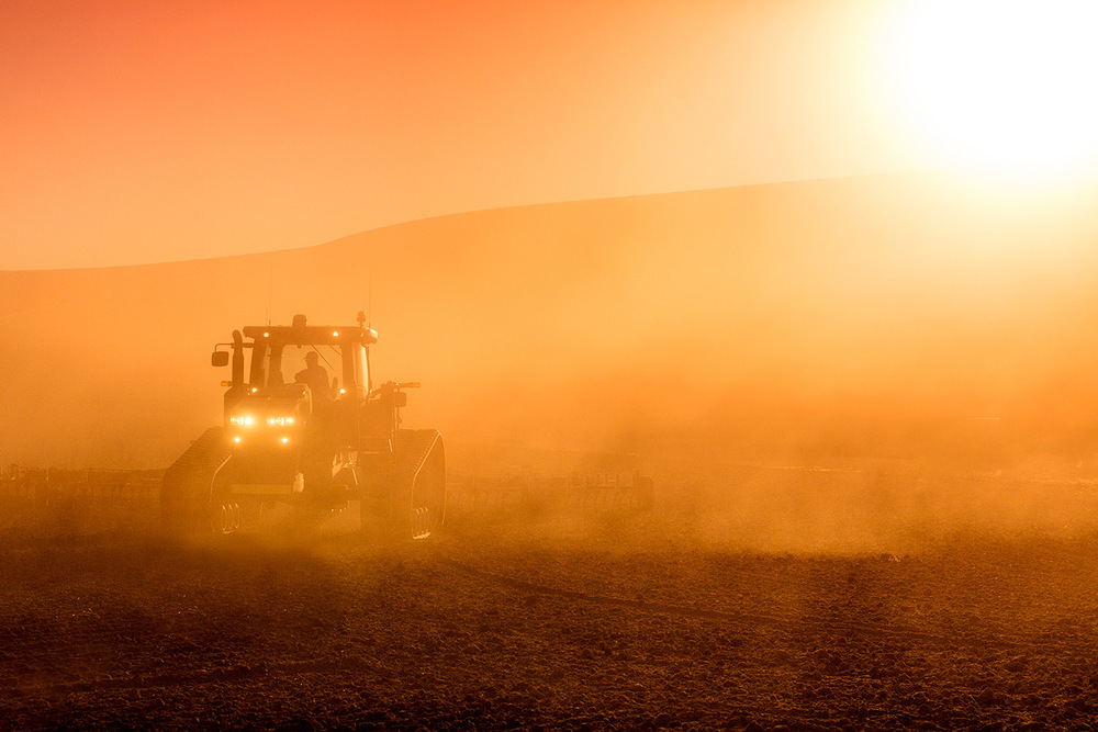 Dusty Fields