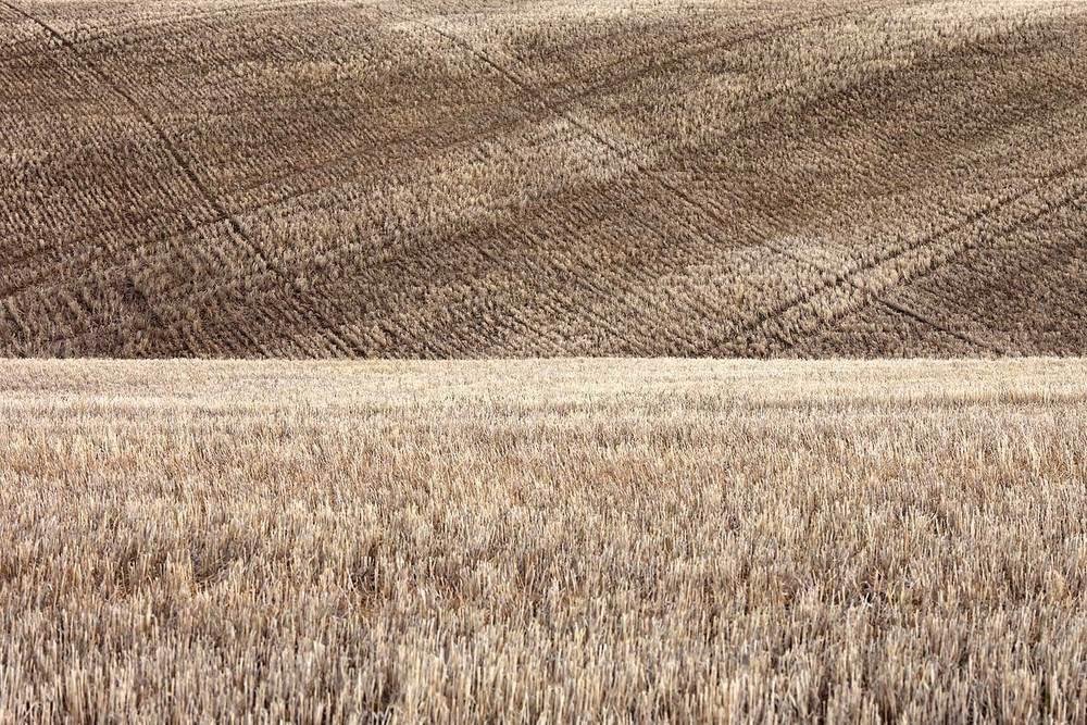 Fallow Crop Field