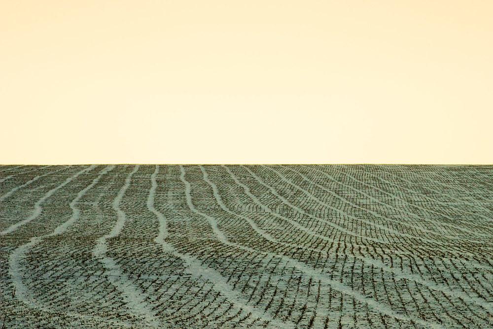 A Field Stitched