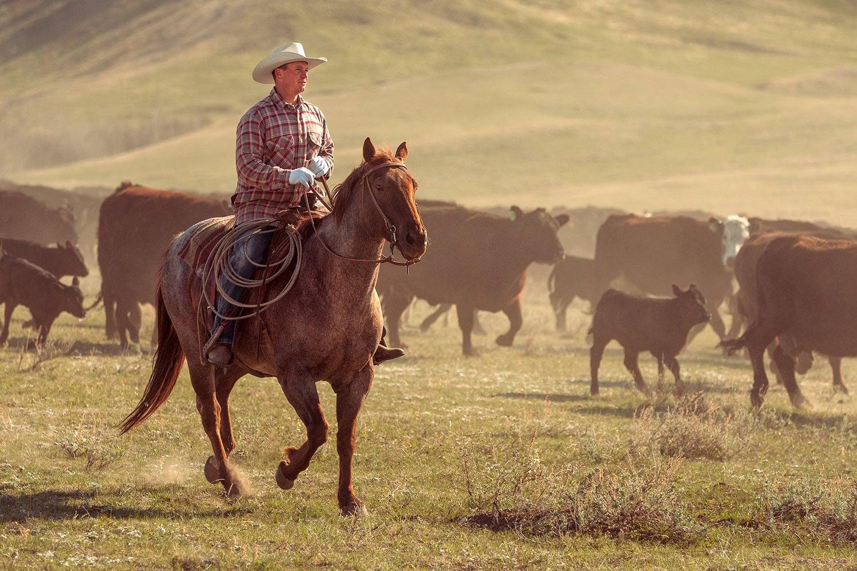 картинки дикого запада диких лошадей таблице настроек можно