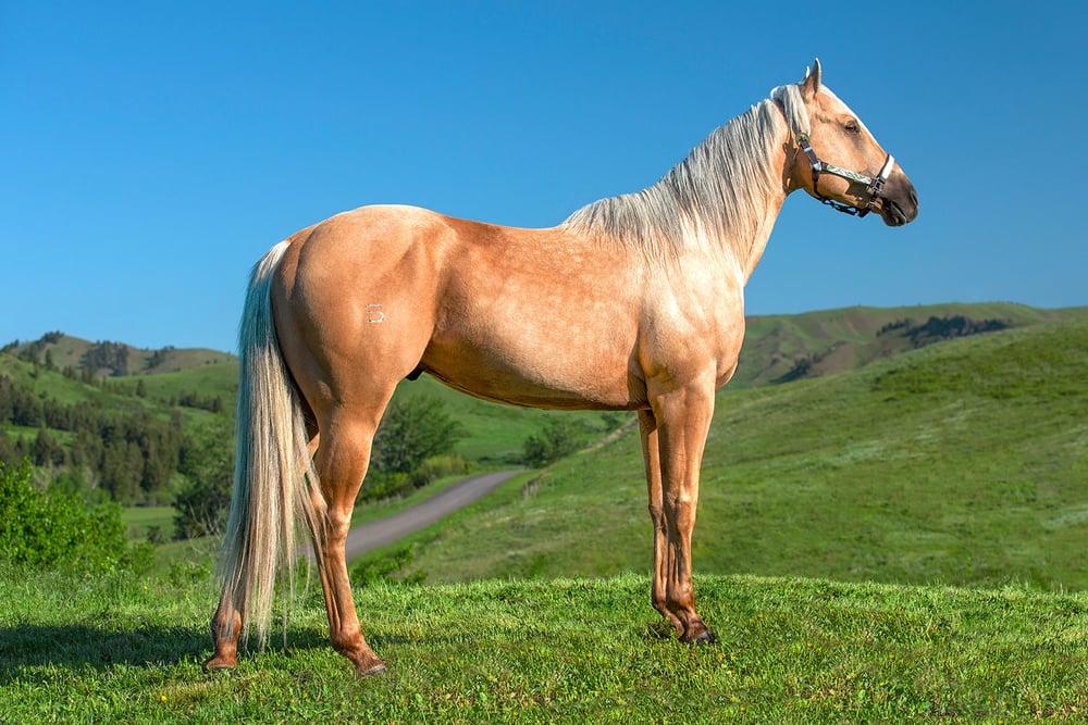 A Horse Named Shaker
