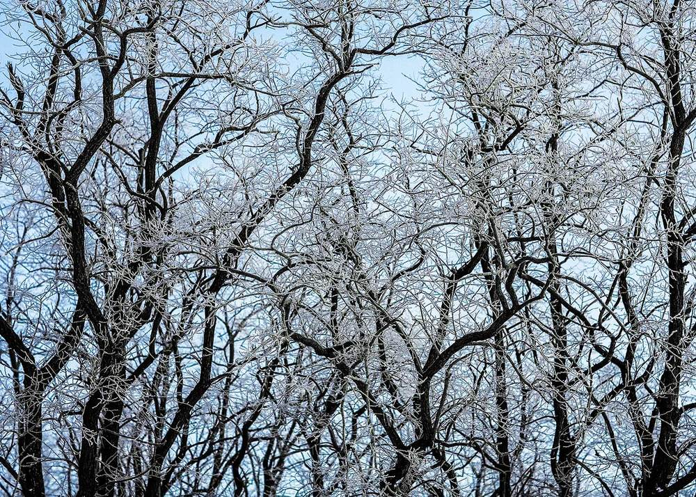 A tangled wall of ice covered tree branches near Verona, Wisconsin.   → Buy a Print