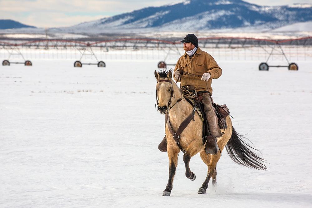 Winter Gallop