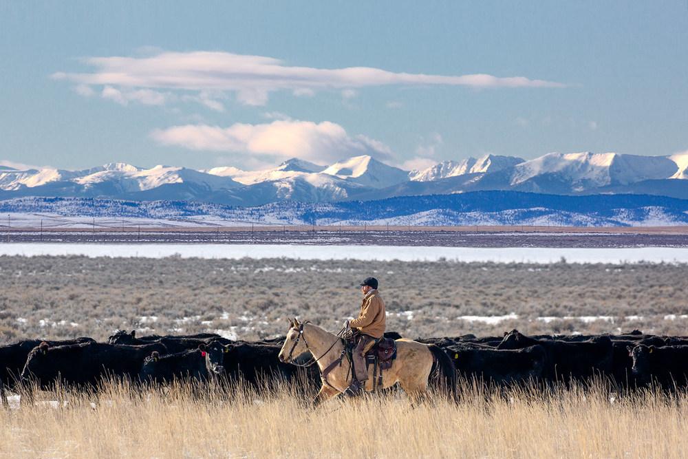 Gallatin Range Rancher