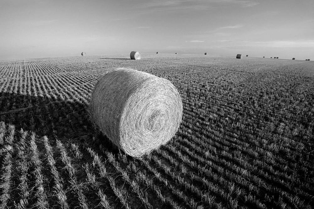 A field full of round bales of straw can be seen everywhere surrounded by wheat stubble and in the late afternoon light.     → Buy a Print