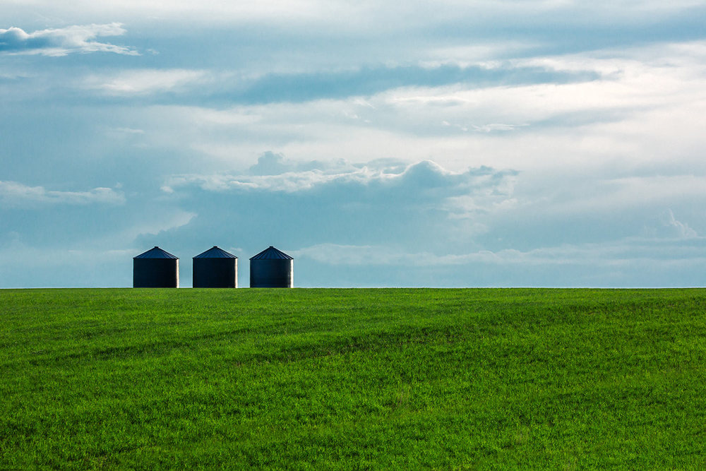 Three grain bins surrounded by a field of young green wheat near Great Falls, Montana.     → Buy a Print