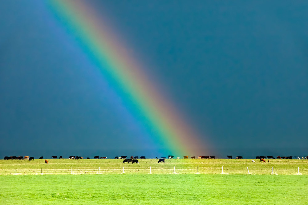 Rainbow Pasture