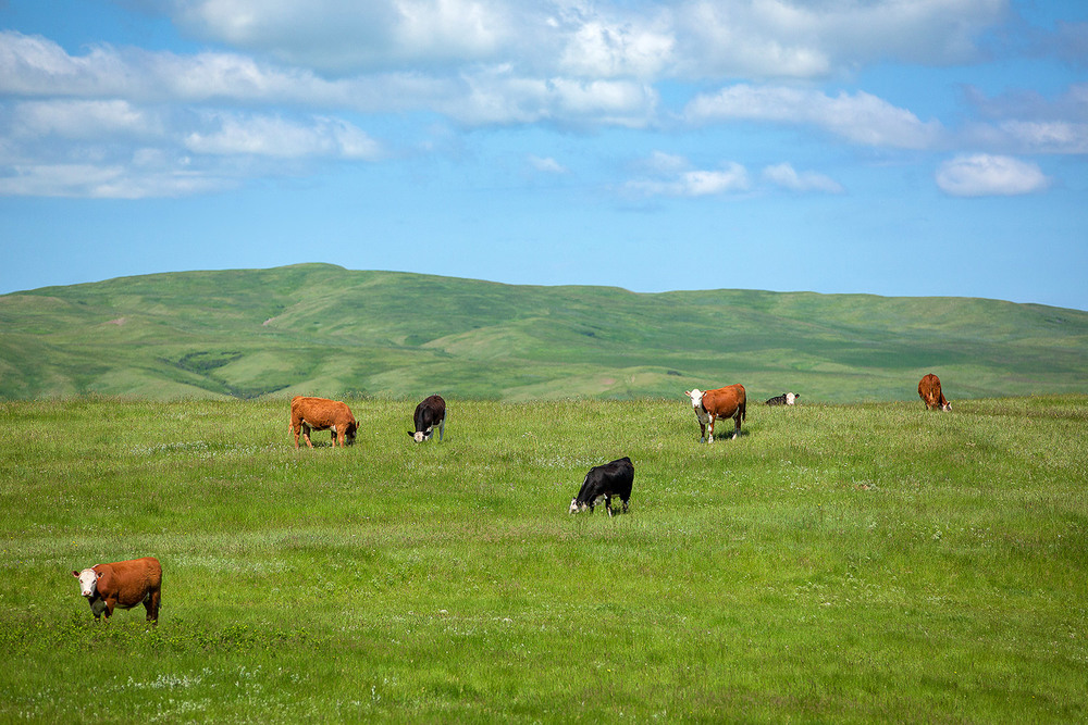 Peaceful Pasture
