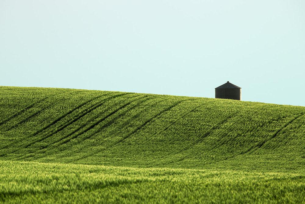 Big Sag Wheat