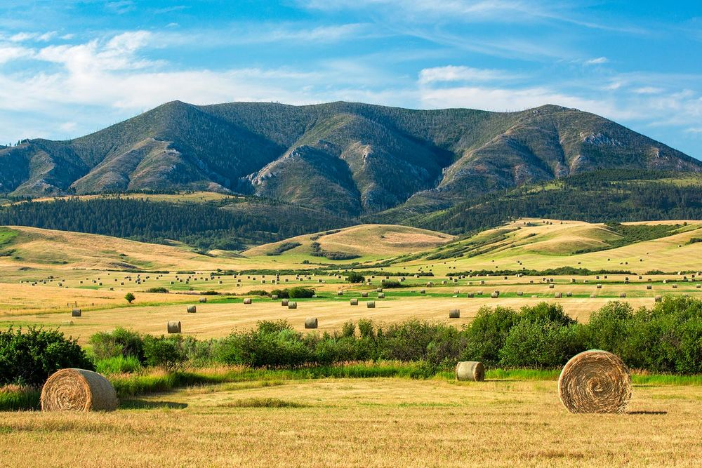 The Judith Mountains draped with a field of round bales of hay near Lewistown, Montana. → Buy a Print or License Photo