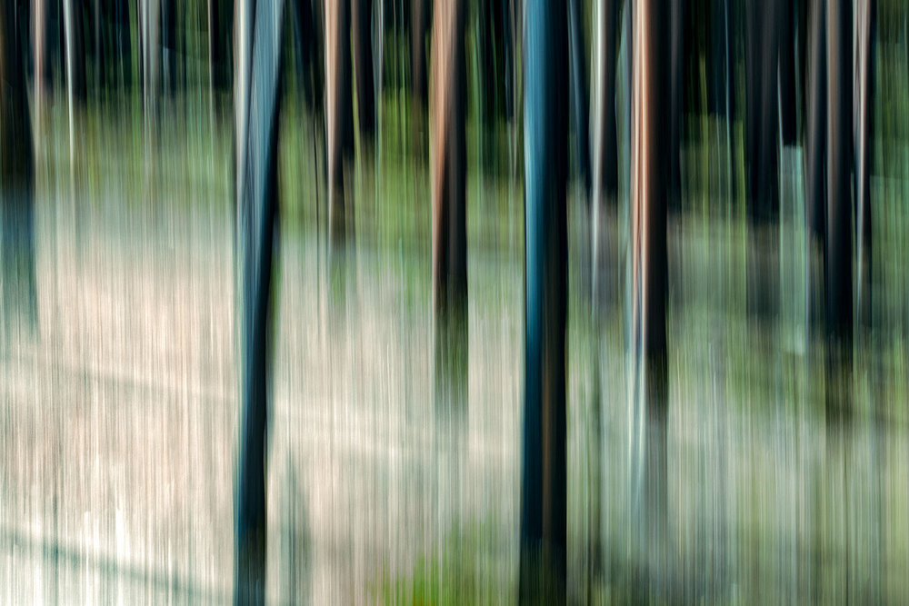An abstract photo of trees while moving my camera at a slow shutter speed near Gardiner, Montana.→ Buy a Printor License Photo