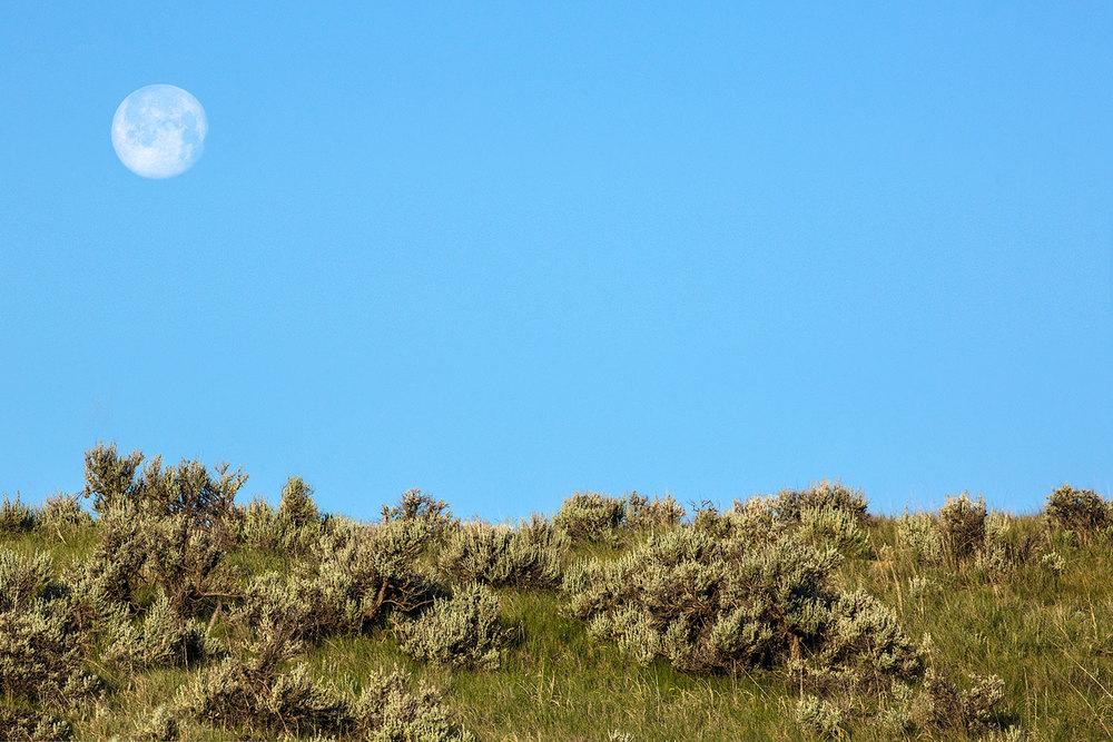 Sage Moon