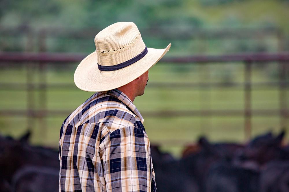 Corral Cowboy