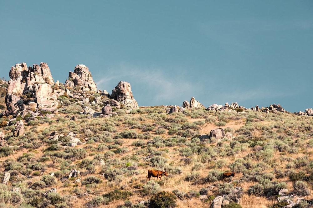 Rugged Pasture