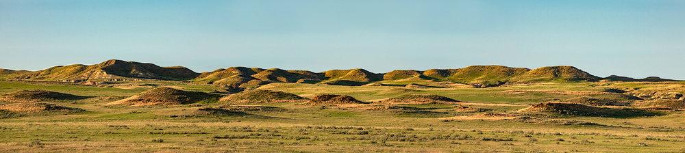 Terry Landscape