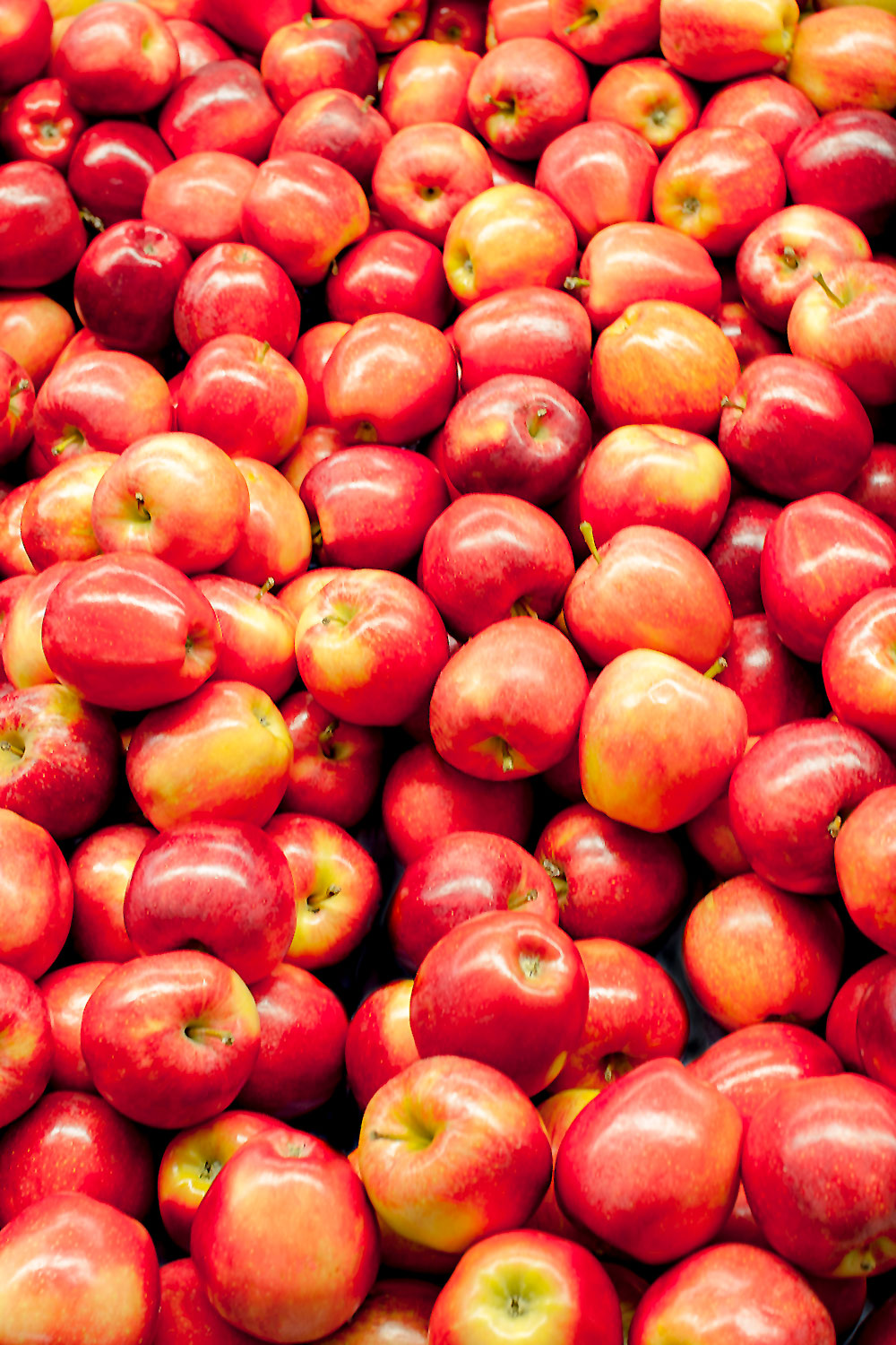 Bountiful Apples