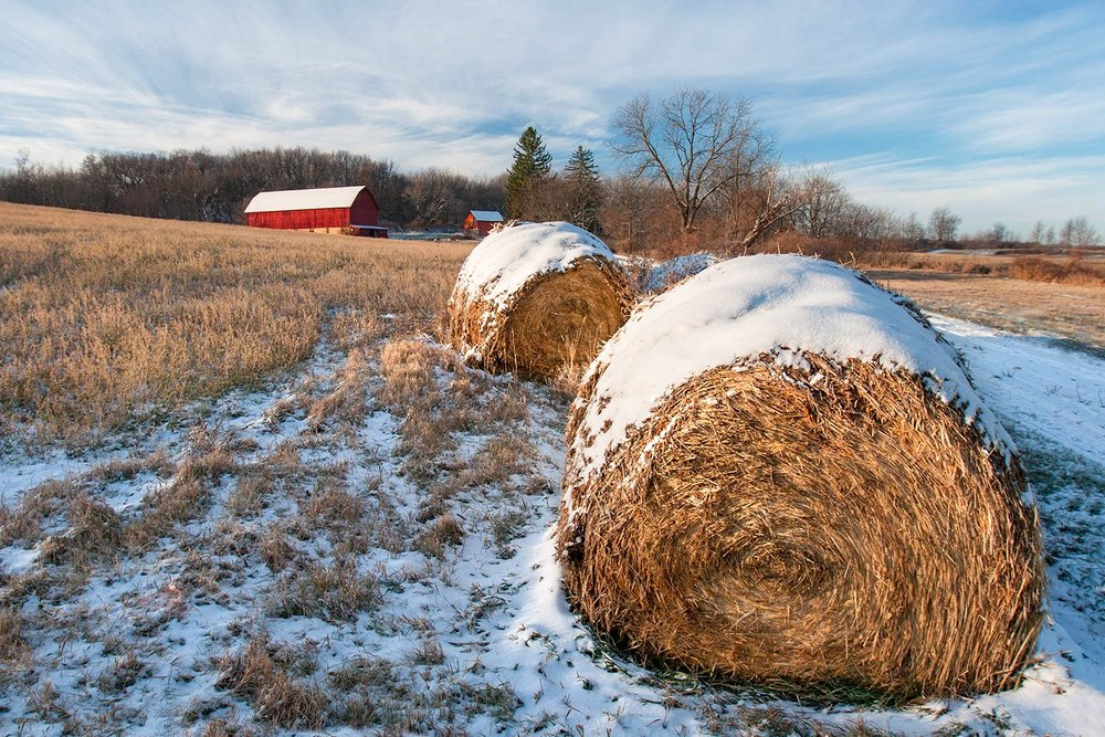 Cold Bales
