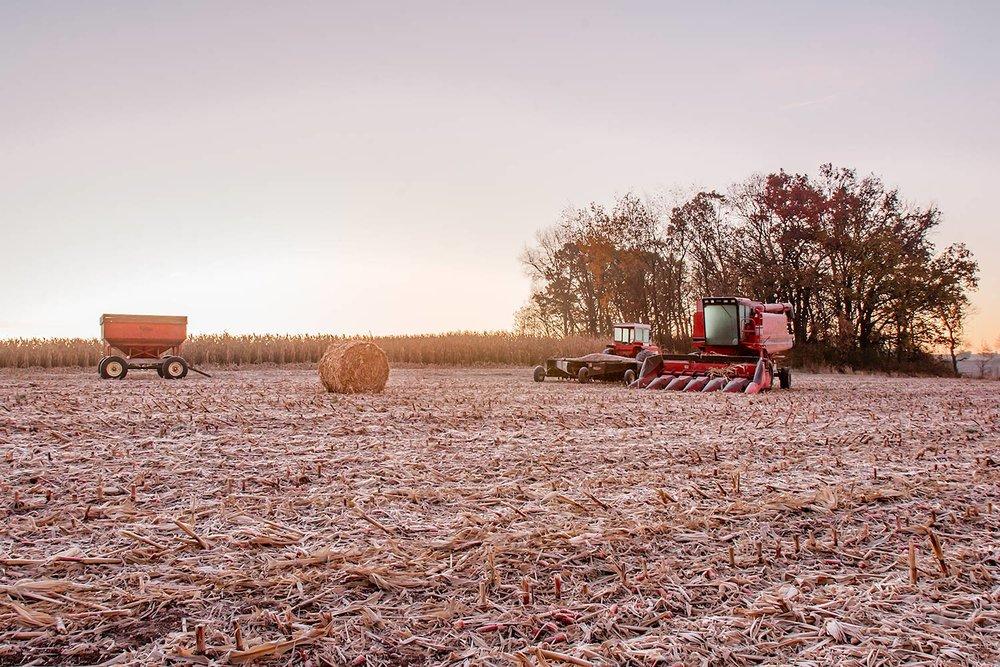 Frosty Harvest