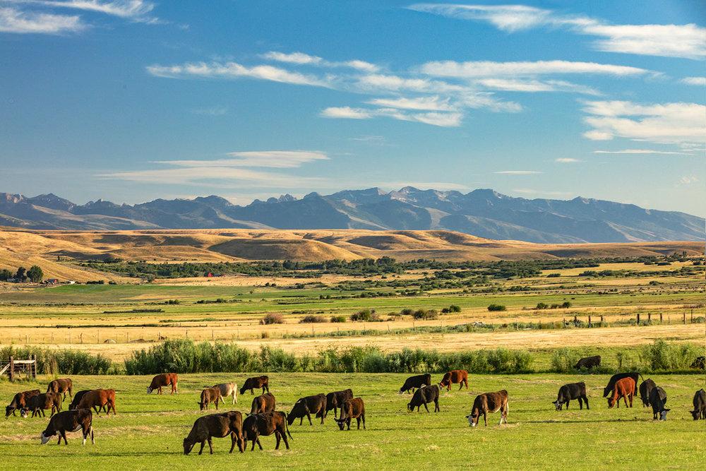 Ranch and Range