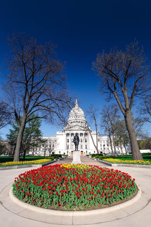 Madison Capitol Tulips