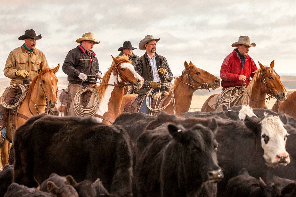 "My photograph of cowboys rounding up cattle on a ranch south of Chinook, Montana was the winner of Country Magazine's 2017 ""Country Life Photo Contest."