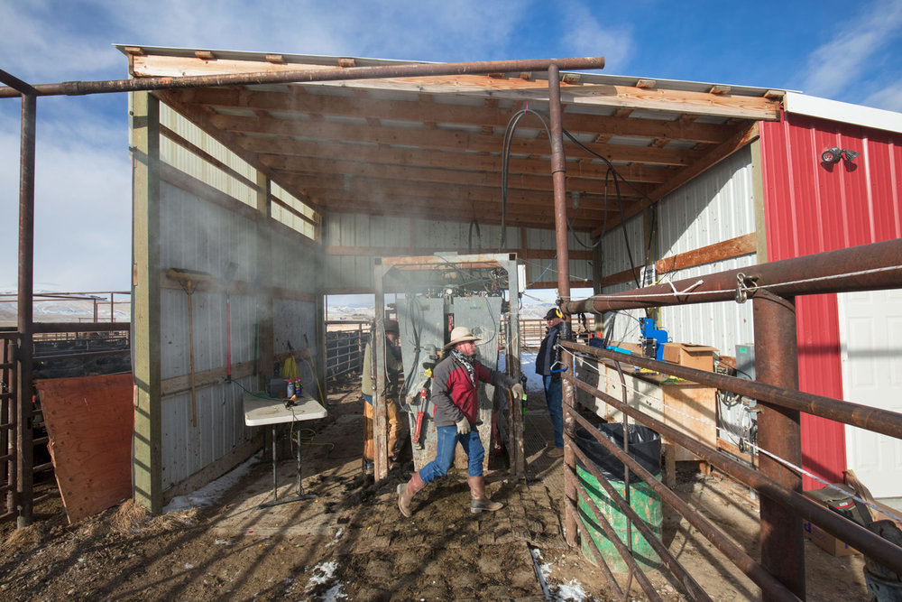 Vaccination Shed