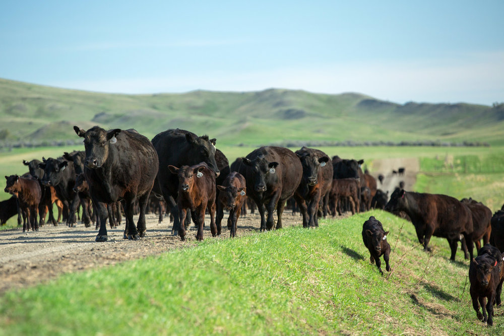 Moving Up the Road