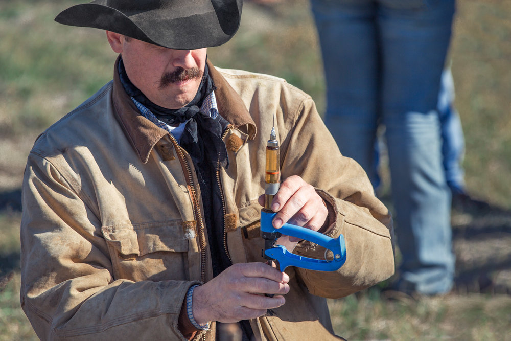 Cowboy Vaccinating