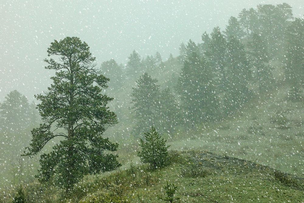 A Snow Falls