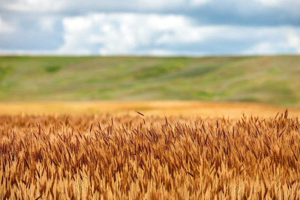 Layers of Grain