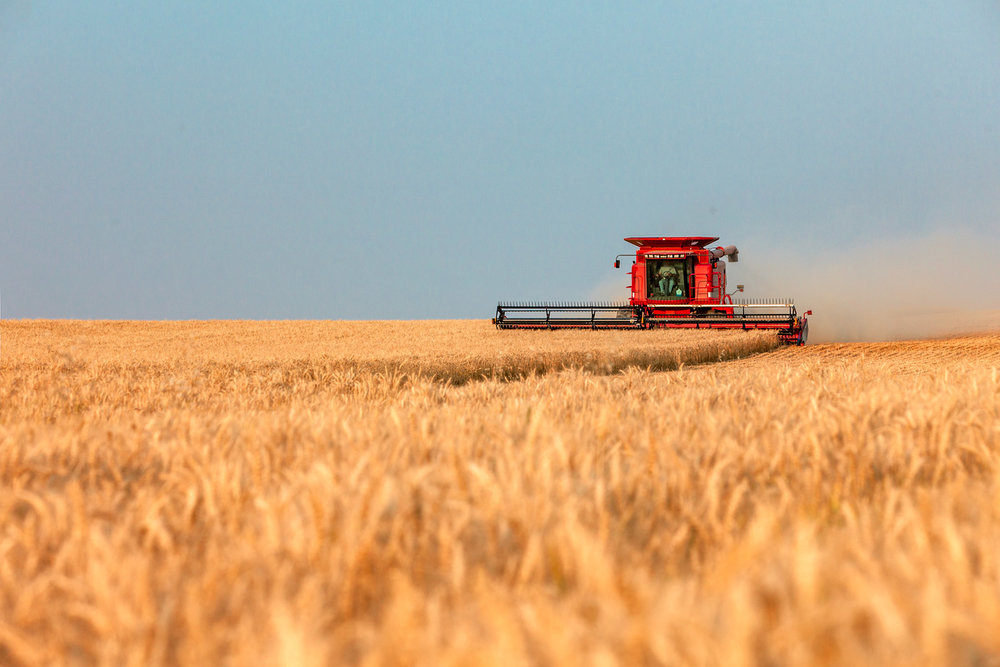 Red Combine Golden Wheat
