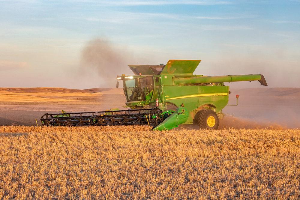 Pulse Crop Harvest