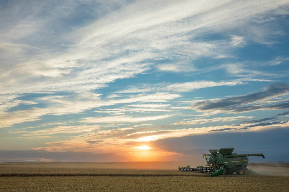 Beautiful Harvesting