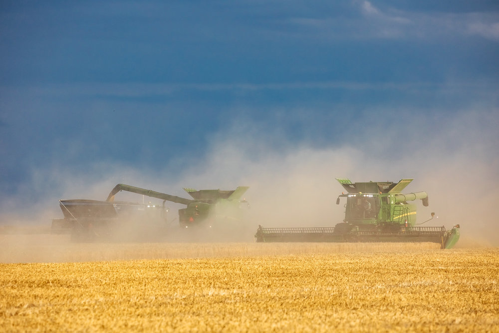 Harvest in Dust