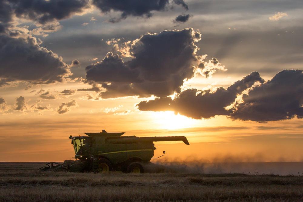 Harvest Summer