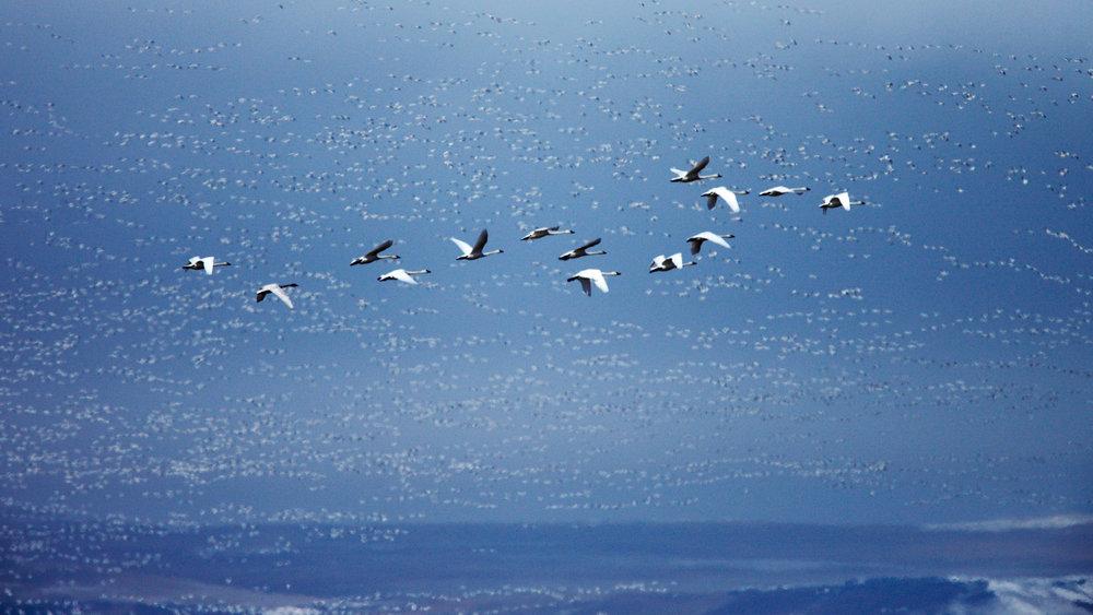 Layers of Birds