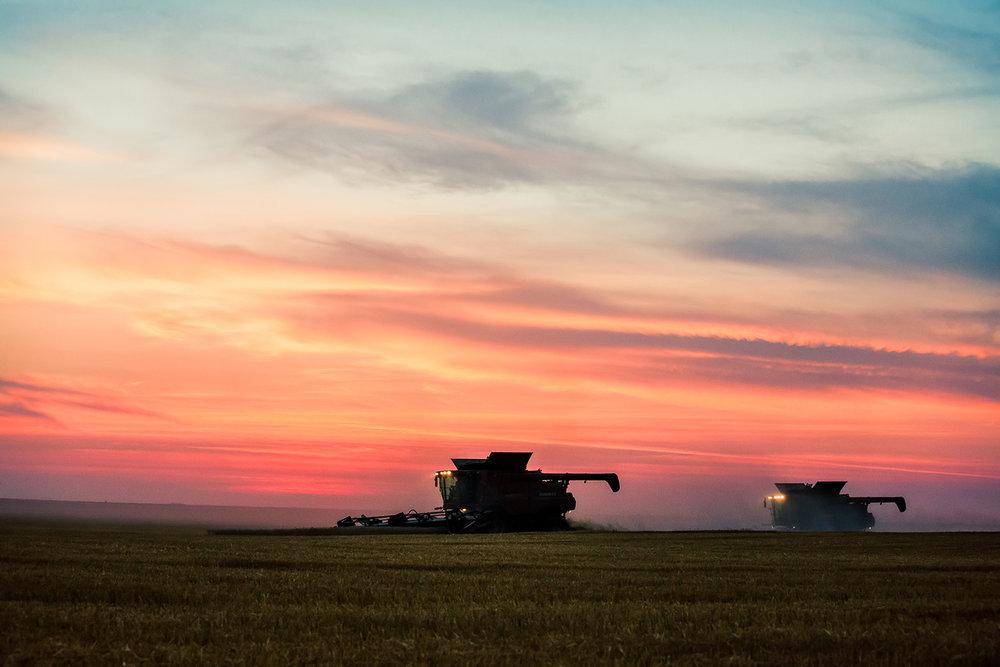 Late Harvest