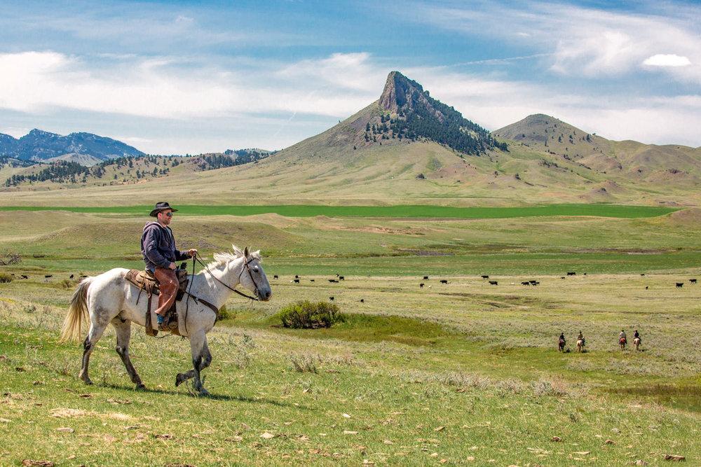 Cowboy Horseback